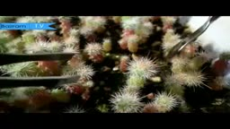 تعویض گلدان کاکتوس