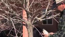 آموزش تصویری هرس درختان
