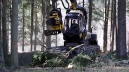 ماشین قطع درختان