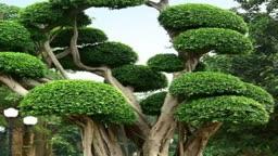 درختان عجیب و غریب