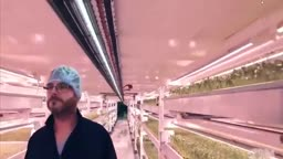 پرورش گیاهان زیر زمین